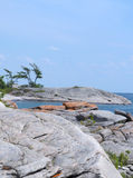 Georgian Bay shoreline. Colorful Georgian Bay shoreline with lichen-covered rocks Royalty Free Stock Photography