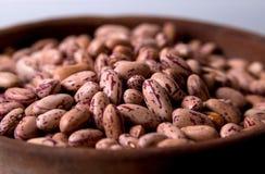 Georgian beans lobio closeup. Georgian beans lobio close up royalty free stock photo