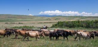 Georgian man with his horse in Caucasus mountains Stock Photos