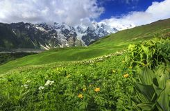 Georgian nature in Caucasus mountains. Amazing view on Svaneti with mountain peak, green hill, flowers on meadow Royalty Free Stock Image