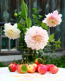Georginas and apples. Georginas flowers and organic apples Royalty Free Stock Photo
