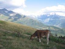 Georgiska berg - Svaneti Royaltyfria Foton