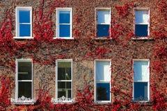 Georgiska fönster som omges av murgrönaen. Dublin.Ireland Royaltyfri Bild