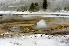 Geotermisk geyser i den Yellowstone nationalparken Arkivbild