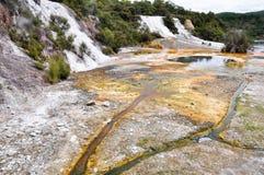 geotermisk rotorua för park för korakeinzorako Arkivbild
