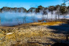 Kuirau Park, Rotorua. Geothermal activity showing sulphur and dead trees. Kuirau park is a few minutes walk from the centre f Rotorua stock photography