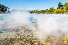 Kuirau Park, Rotorua. Geothermal activity showing sulphur and dead trees. Kuirau park is a few minutes walk from the centre f Rotorua stock image