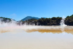 Geothermal area in new zealand Stock Photography