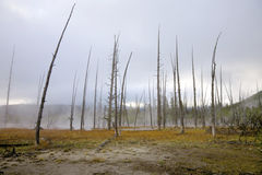 Geothermal Area, Yellowstone Stock Images