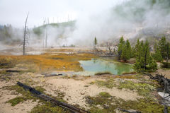 Geothermal Area, Yellowstone Royalty Free Stock Photo