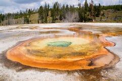 Geothermal geyser Royalty Free Stock Photos