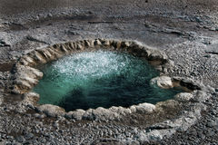 Geothermal geyser Stock Photography