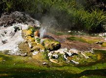 Geothermal Geyser Royalty Free Stock Image