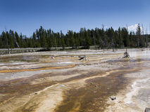 Geothermal Pool in Yellowstone National Park in the USA Royalty Free Stock Image