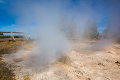 Geothermal with rising steam in yellowstone park. Geothermal with rising steam and colored water in Yellowstone park royalty free stock photo