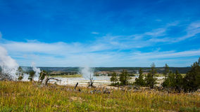 Dean pines and Geothermal under blue sky in yellowstone park. Geothermal with rising steam and dead pine trees in Yellowstone park royalty free stock photography