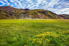 Geothermal soars among the grass. Summer trip to Iceland. The green lawn in the Valley National Park Landmannalaugar. Geothermal soars among the grass Stock Photography