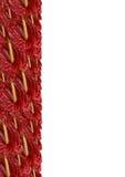 Gepackter roter Blütenschweif Stockbilder