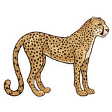 Gepard Royaltyfri Fotografi