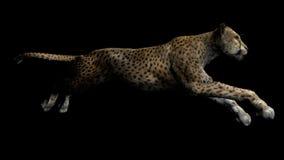 gepard的图象 免版税库存照片