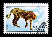 Gepard (Acinonyx jubatus), fauna Afryka (1981) serii, około Obrazy Stock
