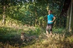 Gepard auf einem Weg in der Natur Stockbild