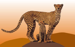 Gepard con el perrito Fotografía de archivo