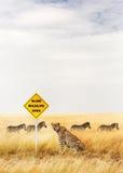 Gepard, der am Überfahrt-Zeichen der wild lebenden Tiere sitzt stockfoto