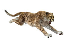 Gepard der Wiedergabe-3D auf Weiß lizenzfreies stockbild