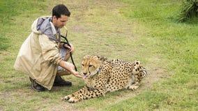 Gepard i treser fotografia stock