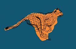 Gepard podczas pościg, Afryka Zdjęcia Royalty Free