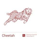 Gepard, rysować zwierzęta, vectore Zdjęcie Stock