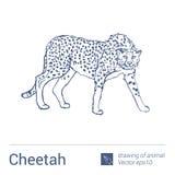 Gepard, rysować zwierzęta, vectore Obrazy Royalty Free