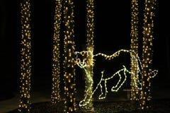 Gepard som göras från ljusen Arkivbilder