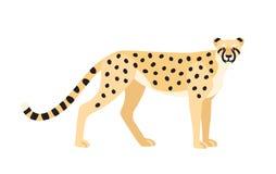 Gepard som isoleras på vit bakgrund Behagfullt exotiskt köttätande djur eller rovdjur med det prickiga laget Snabbt afrikanskt oc vektor illustrationer
