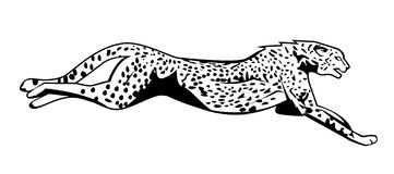 Gepard springen Lizenzfreie Stockfotos