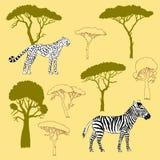 Gepard-, Zebra- und Savannenbäume Stockfotos