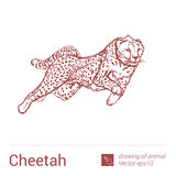 Gepard, Zeichnen von Tieren, vectore Stockfoto