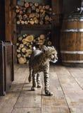 Geparda lisiątko s Zdjęcie Stock