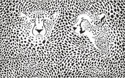 Gepardbakgrund med huvud Royaltyfria Bilder