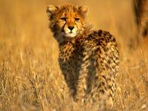 Afrikanische Tiere Lizenzfreie Stockbilder
