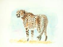 Gepardvattenfärgmålning stock illustrationer