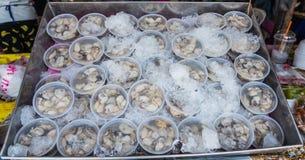 Gepelde oesters Royalty-vrije Stock Foto