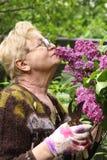 Gepensioneerdevrouw in handschoenen met de bloemen van de secatorgeur lilak Stock Afbeelding