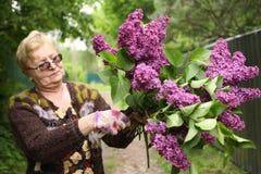 Gepensioneerdevrouw in handschoenen met de bloemen van de secatorgeur lilak Royalty-vrije Stock Foto's