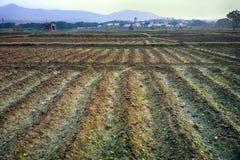 Gepflanzt mit den Reiskontrollen nicht schon gefüllt mit Wasser Lizenzfreies Stockbild