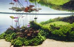 Gepflanztes Aquarium Stockbild