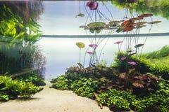 Gepflanztes Aquarium Lizenzfreies Stockfoto
