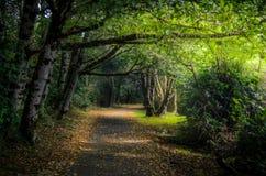 Gepflasterte Spur im Wald Stockbilder