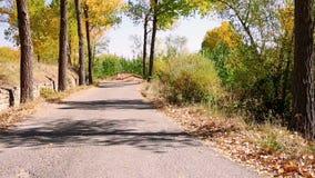 Gepflasterte Straße im Herbst mit gefallenem Braun verlässt in Orihuela Del Tremedal, Spanien stock video